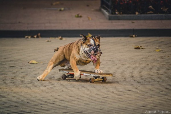 12183968_-600x400 Пес-скейтбордист на Приморском бульваре Одессы (ФОТО)