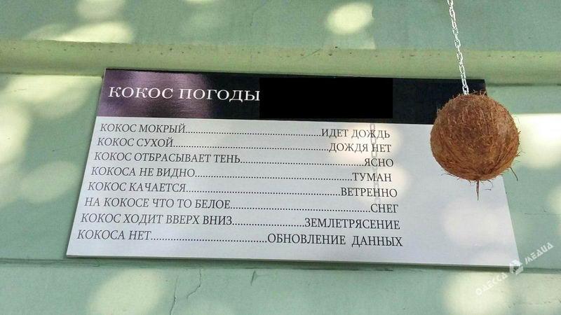 kokos Одесское кафе предсказывает погоду с помощью кокоса