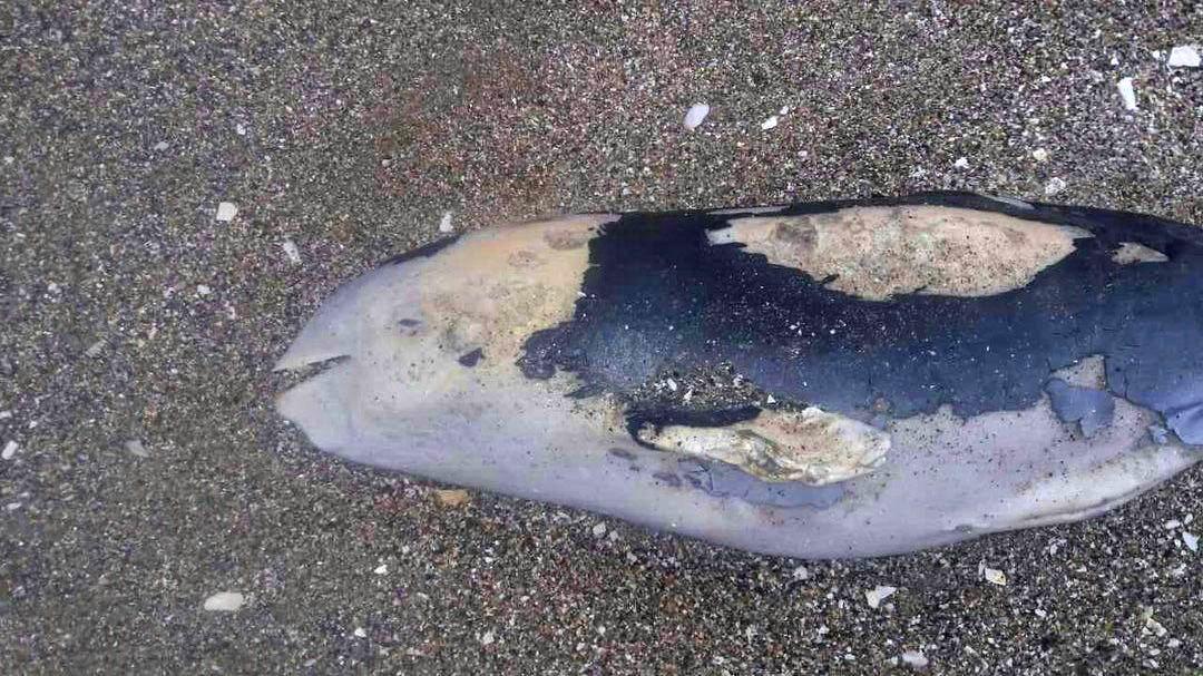 850008 Шторм в Одессе убил дельфиненка