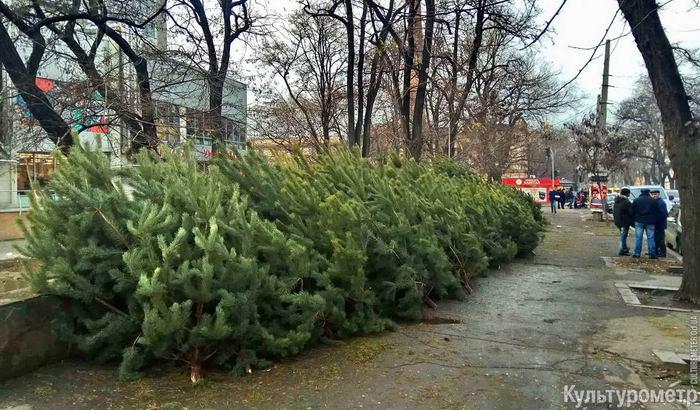 Одесские улицы заполнили новогодние сосны (фото)